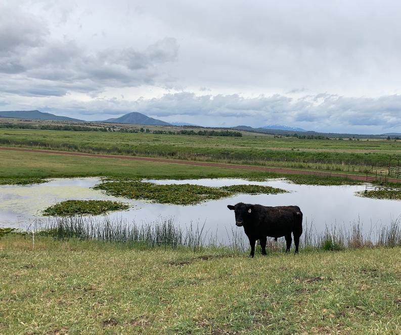 Vestal Ranch Angus Beef