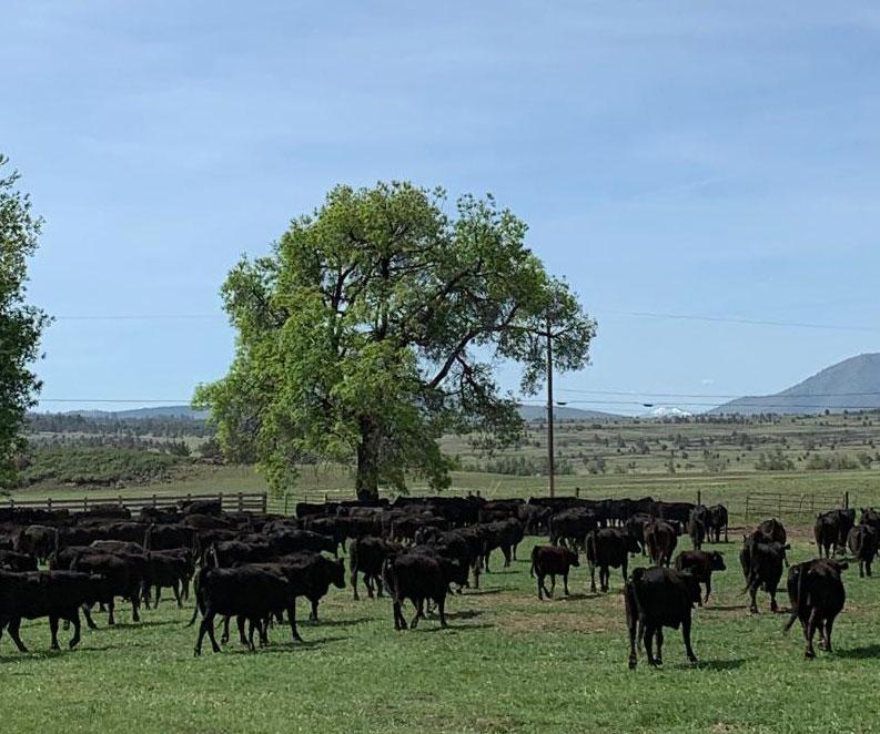 Vestal Ranch